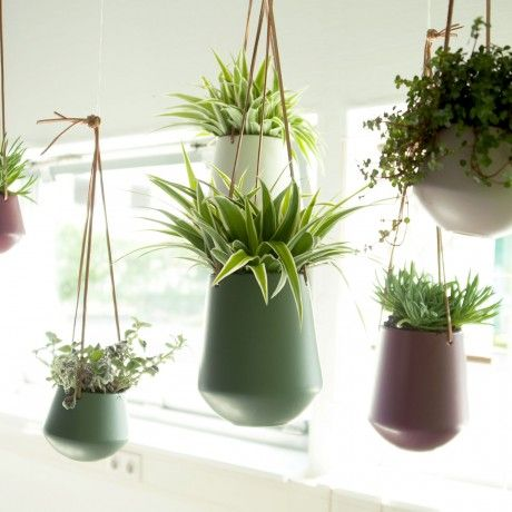 Hanging planter by present time designed in the for Spezielle zimmerpflanzen