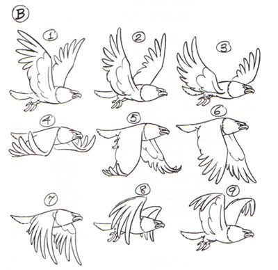 Bird Movement çizim Drawings Bird Drawings Animation