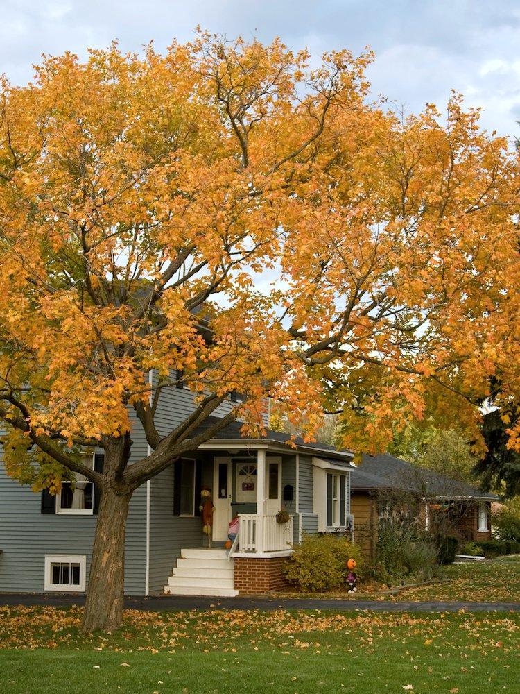 Photo of 35 Tipps für die Bewältigung all Ihrer Herbstprojekte