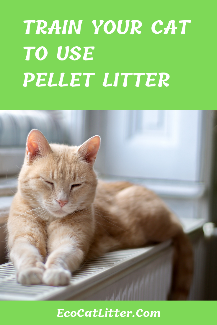 Train Your Cat To Use Pellet Litter Guide With Step By Step Instructions Cats Litter Natural Cat Litter
