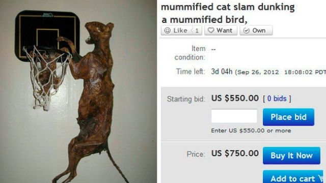 We All Missed The Greatest Ebay Auction Of All Time Memes Cats Selling On Ebay