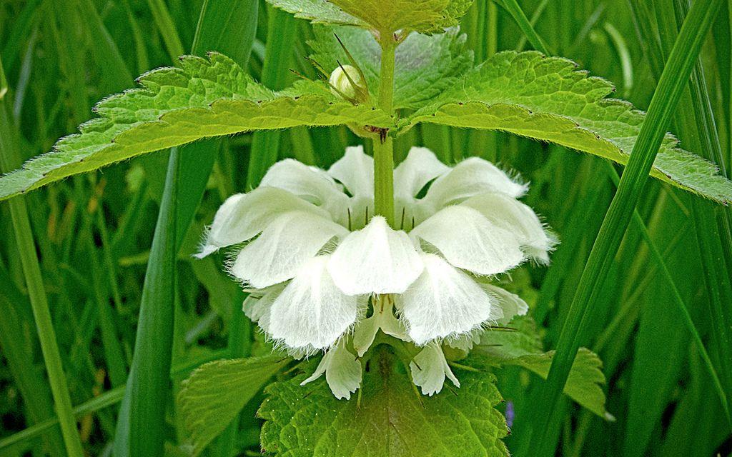 plante eficiente în varicoză recuperarea după surplus