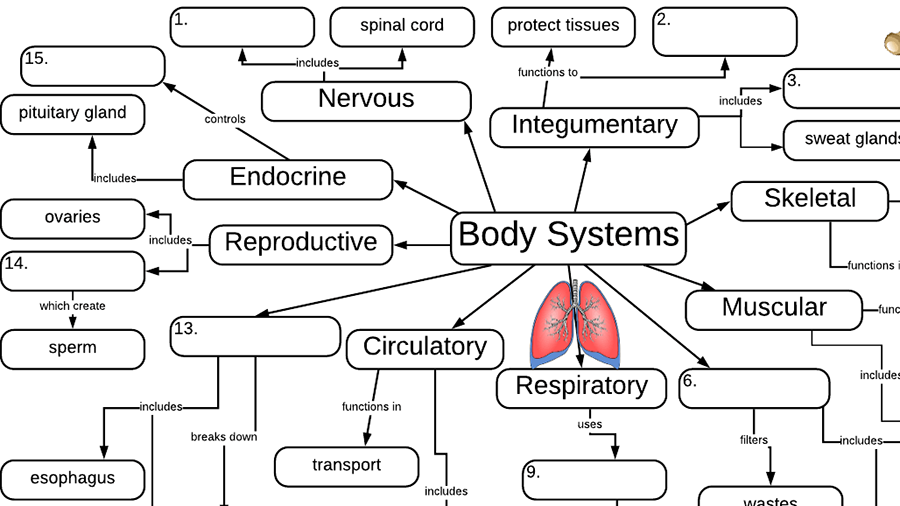 Body Systems Graphic Organizer | Body systems, Biology ...
