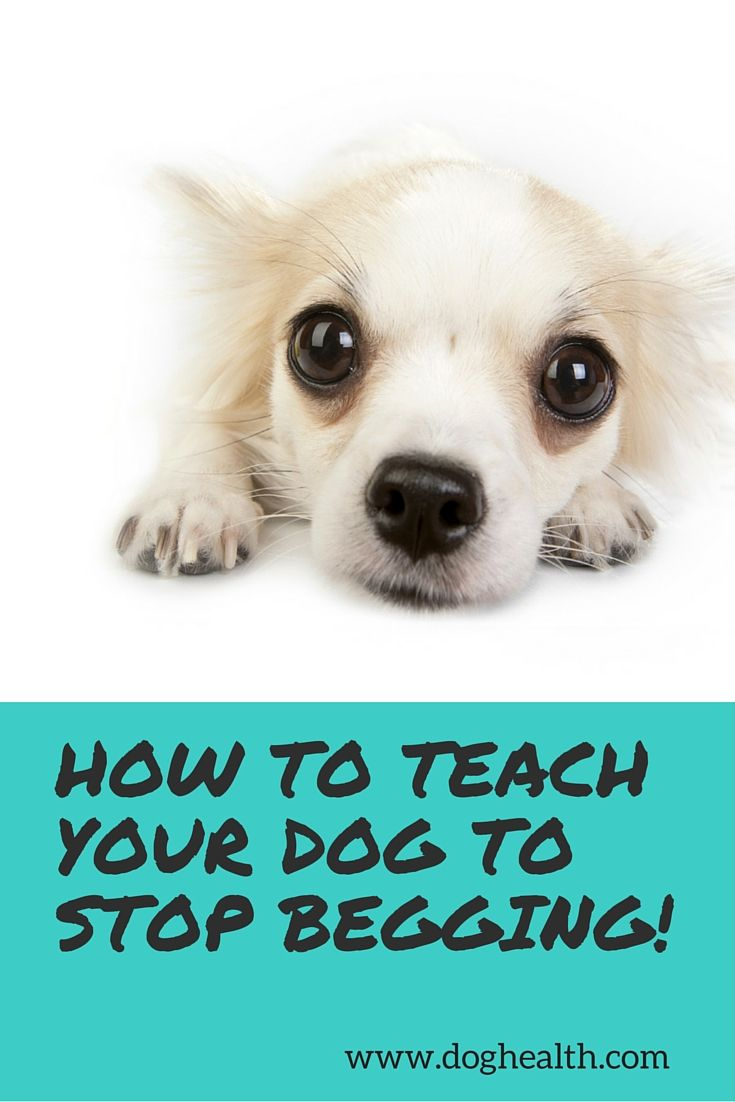 Begging In Dogs Is A Learned Behavior At Some Point Dogs Discover