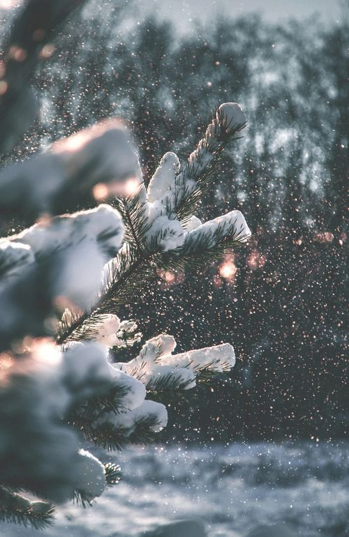 Along my (really long) driveway, I have nothing but pine trees by it, and rn there is 2 1/2 ft of snow the trees look exactly like this. So cold, but Soo pretty