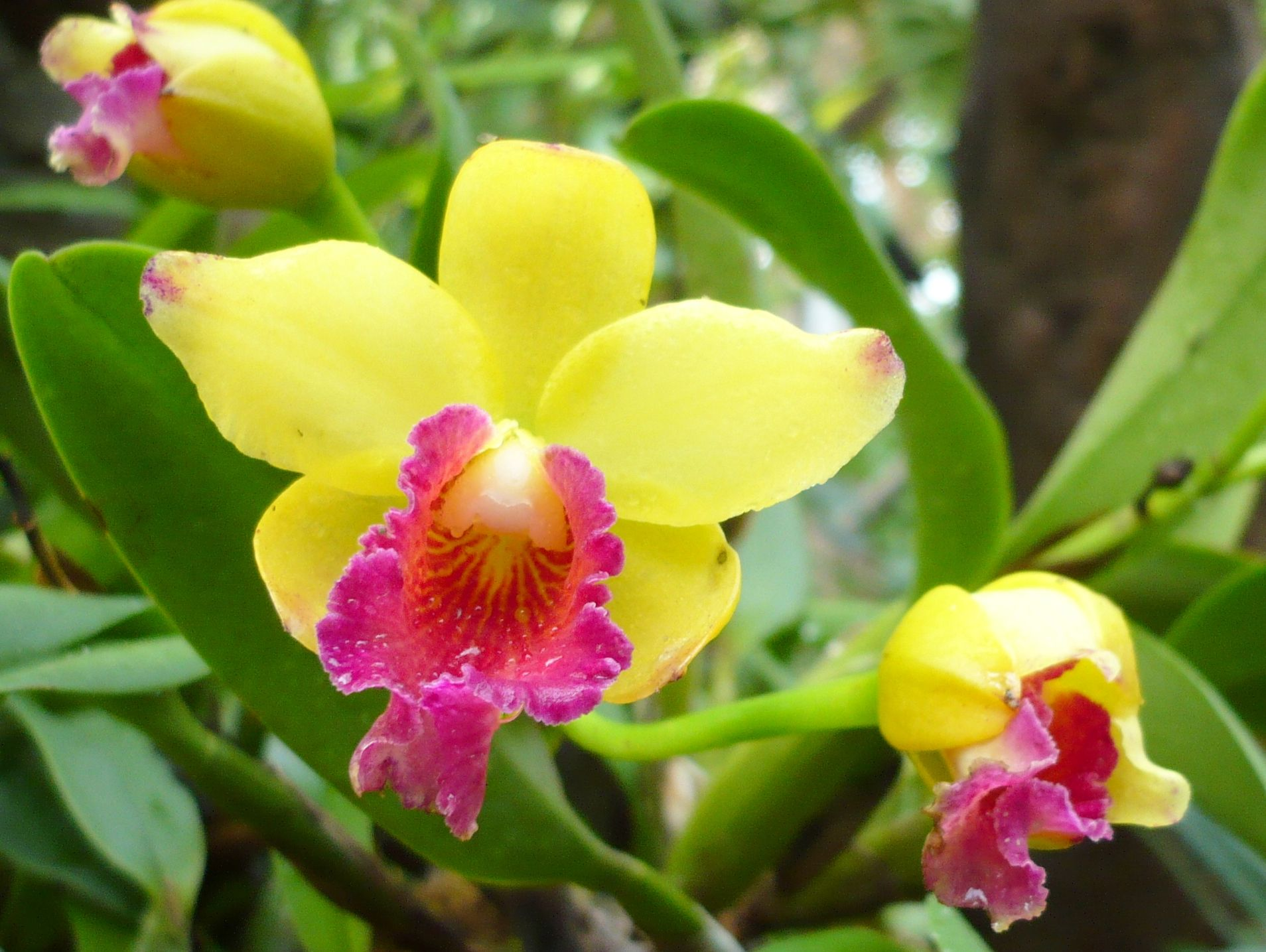 Orchid Flowers File Name 3d Abstractotherbright Orchids32095