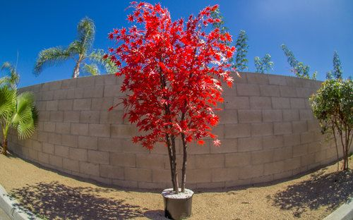 Artificial Burgundy Japanese Maple Tree Add Some Color to Your Life by GeraniumStreet
