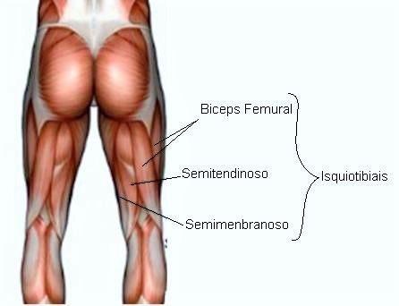 Estirar los músculos isquiotibiales es de suma importancia, ya que ...