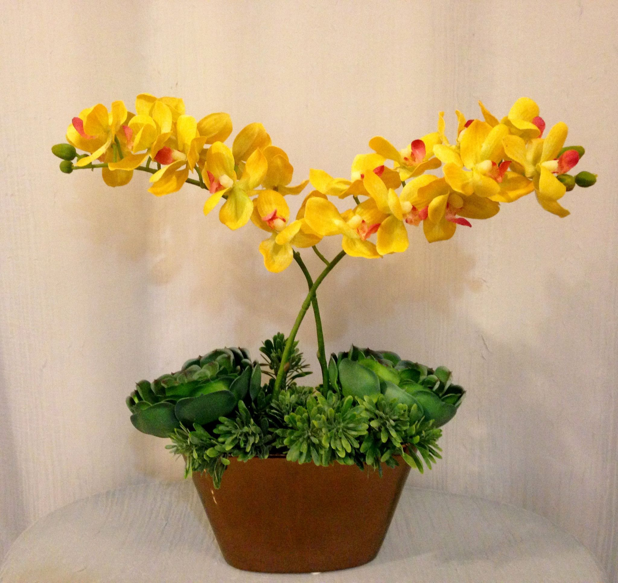 Phalaenopsis orchid and succulent plant arrangement in oval ceramic