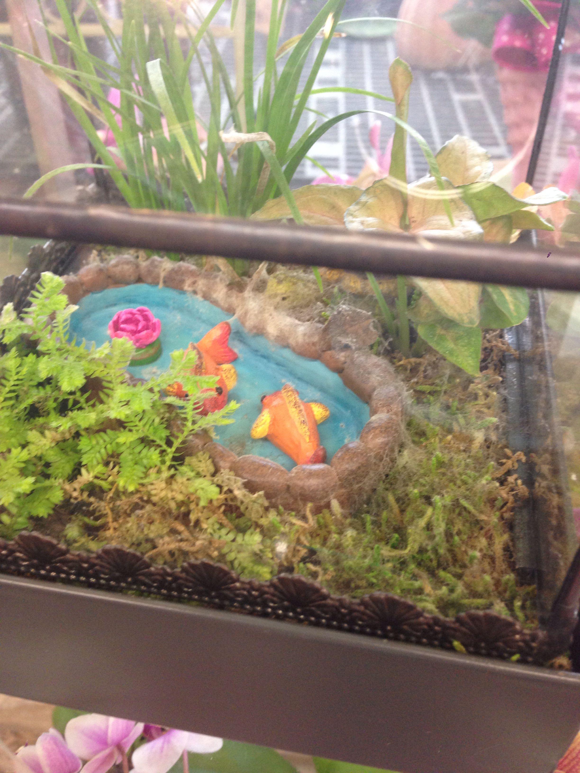 Fish tank terrarium - Fish Tank Terrarium