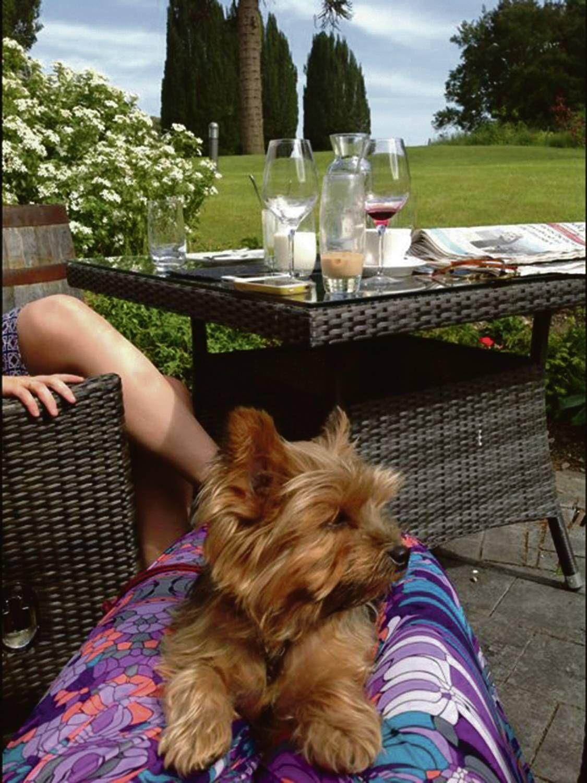 Discovering Ireland S Dog Friendly Hotels Dogtravel Irelanddog