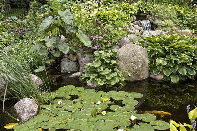 Aquascape Your Landscape: Designing Your Dream Pond ...