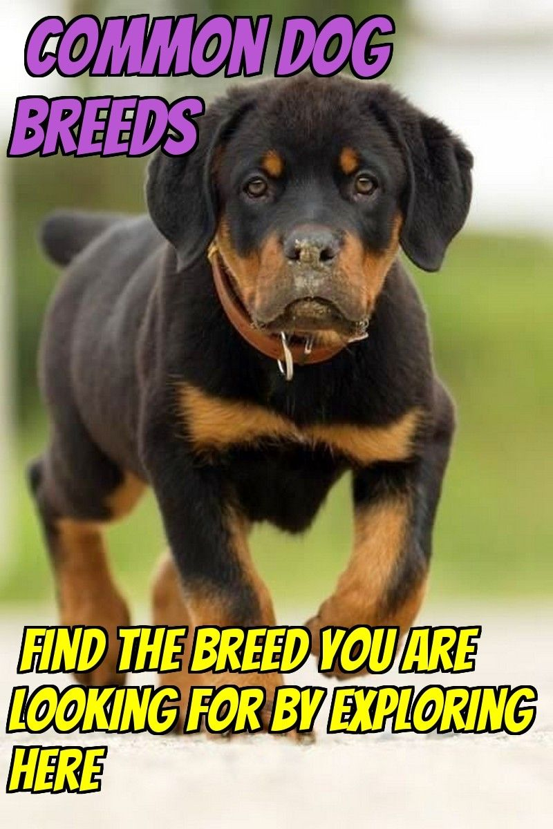 5 Dog Breeds That Are Widely Renowned Around The Globe Dogs Dog