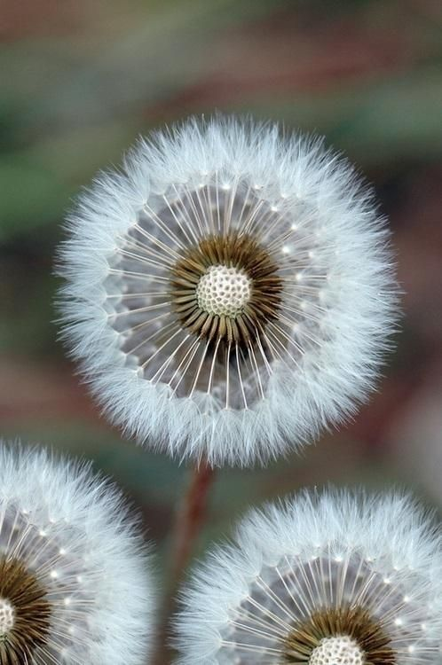 All White Flowers Are Beautiful And With Meanings Of Their Own So Which Do You Prefer Beautiful Flowers Small White Fl Beautiful Flowers Dandelion Flowers