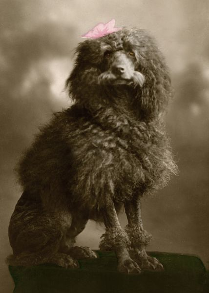 Gorgeous Vintage Dog Photos From The Kennel Club Archive Dog