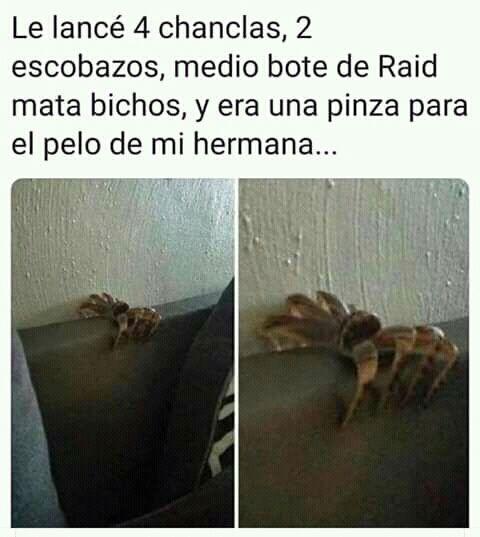 Zodiaco Karmaland 4 En 2020 Memes Divertidos Memes Comicos Memes Mexicanos Divertidos