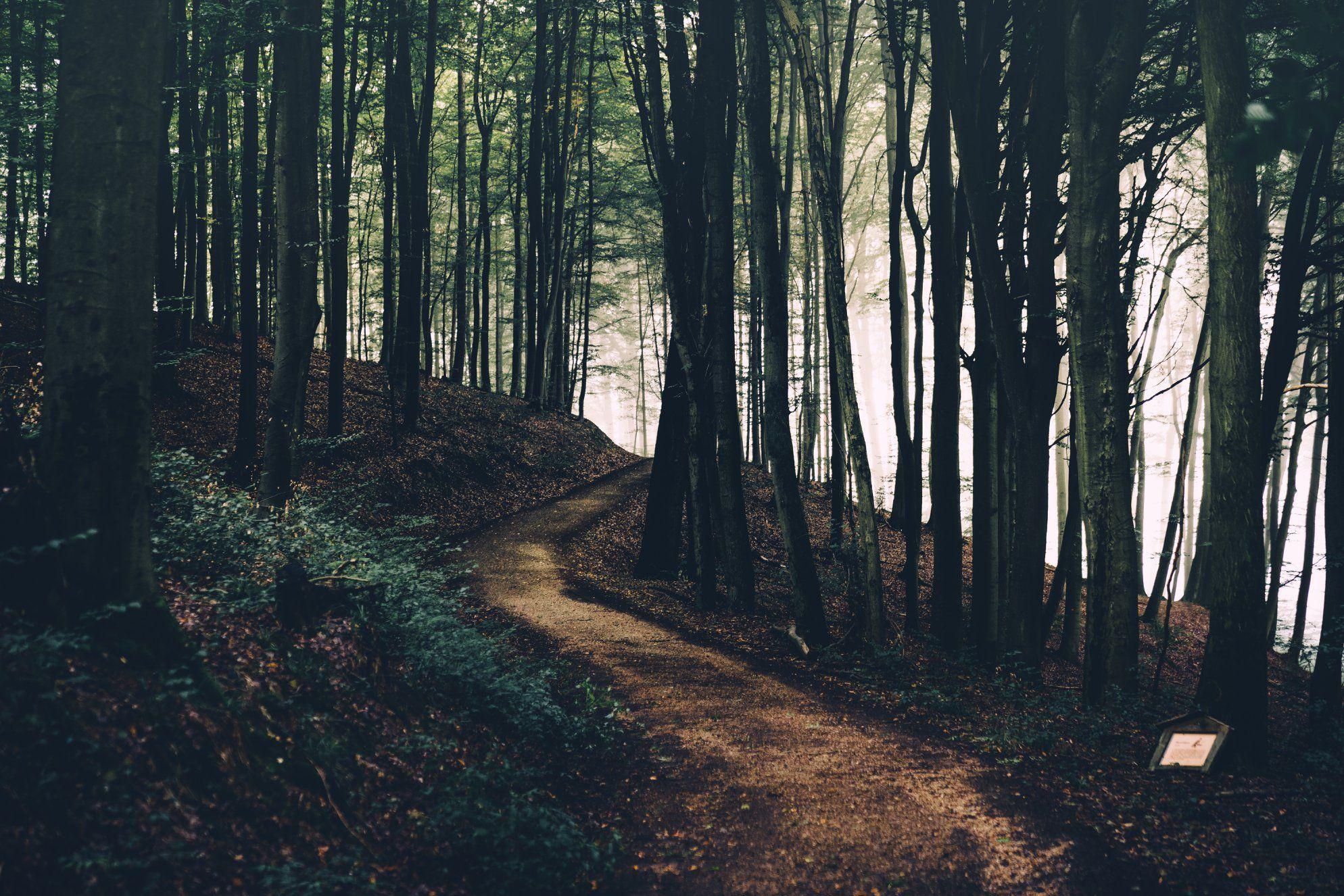 Single im odenwald