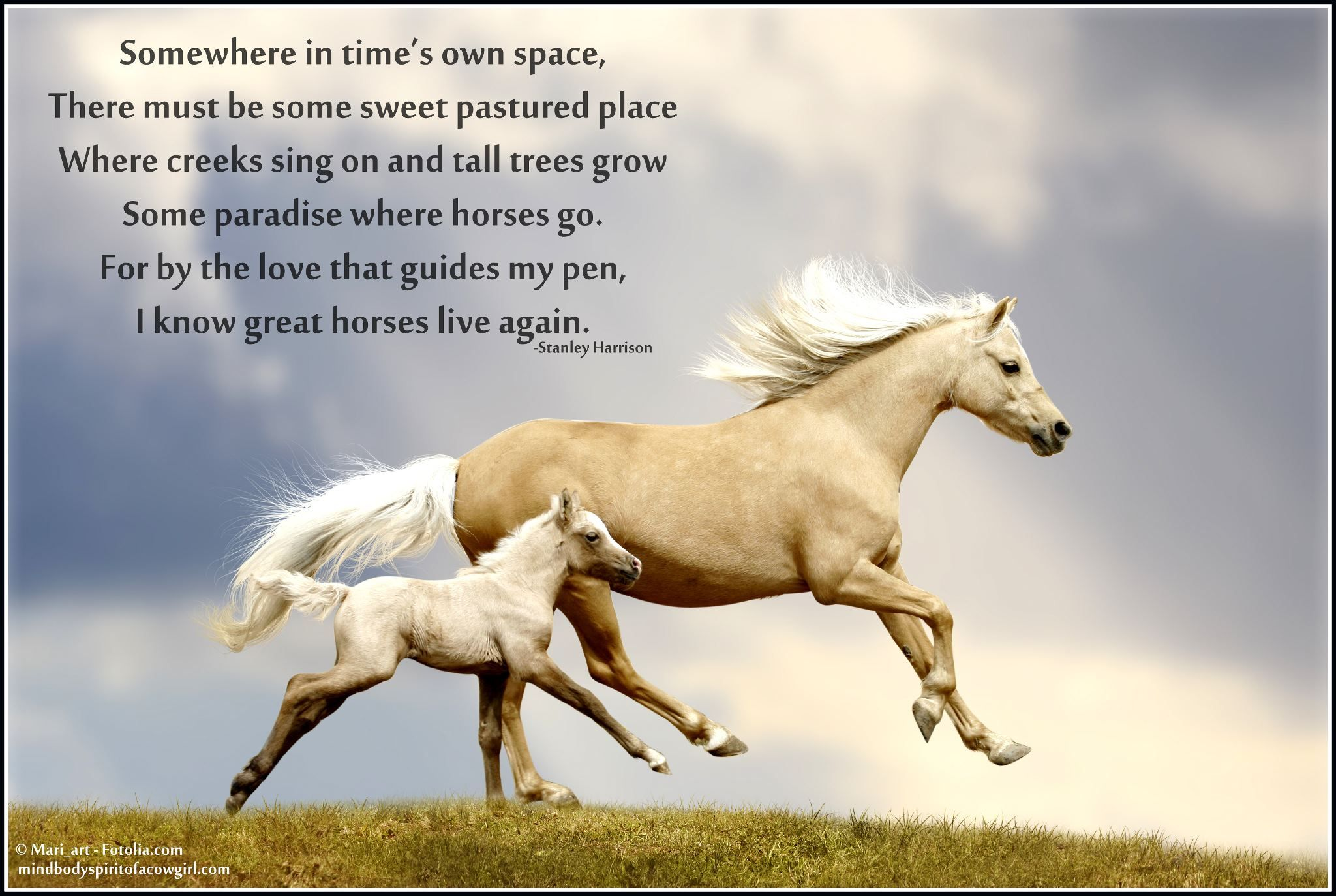 Great horses live again Horses, Horse love, Horse quotes