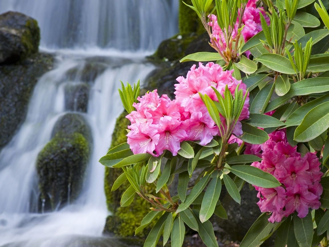 Spring flowers background 1152x864 spring flowers and waterfall spring flowers background 1152x864 spring flowers and waterfall desktop pc and mac wallpaper mightylinksfo