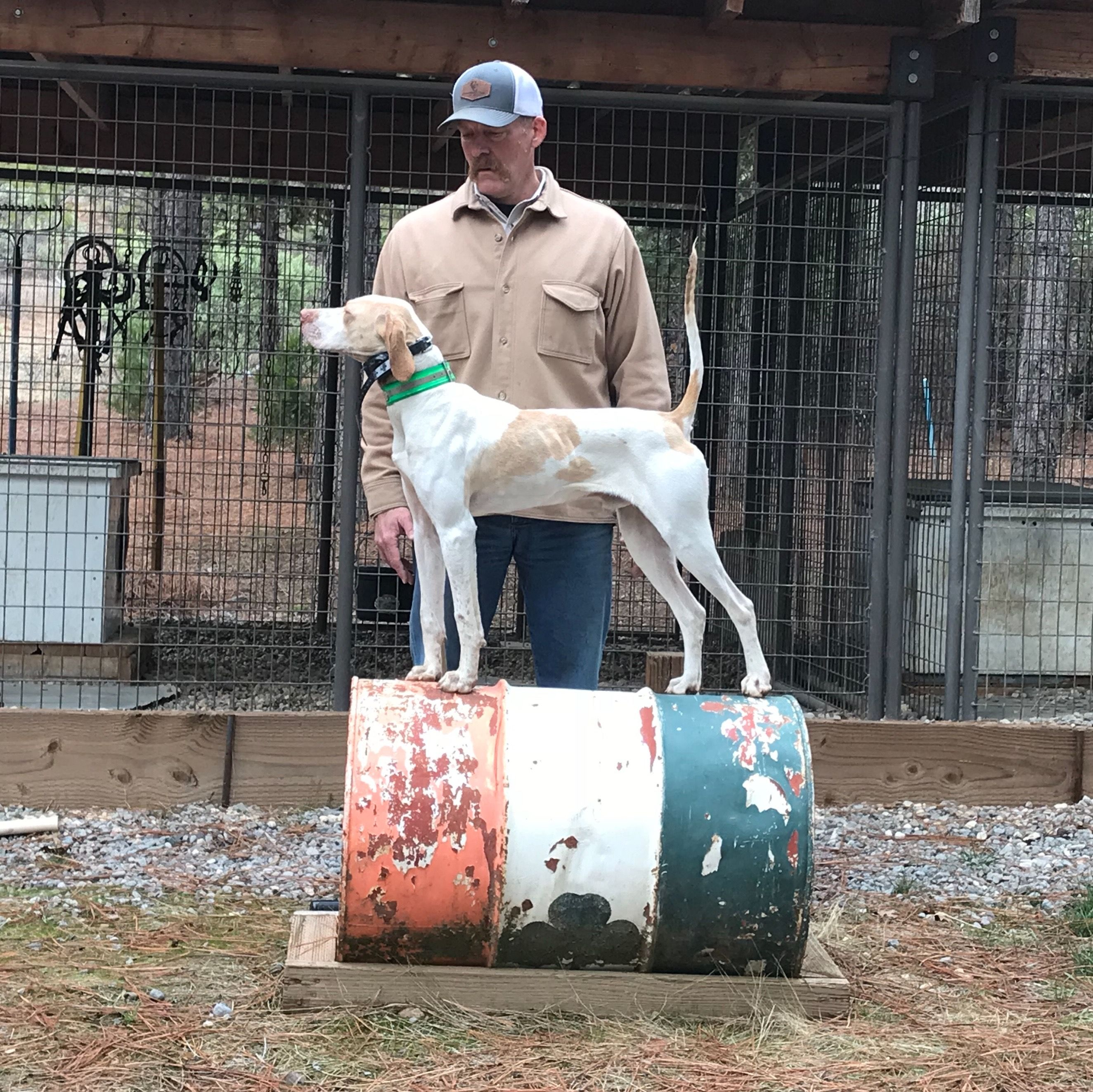 Pin by Indian Head on English Pointers English pointer