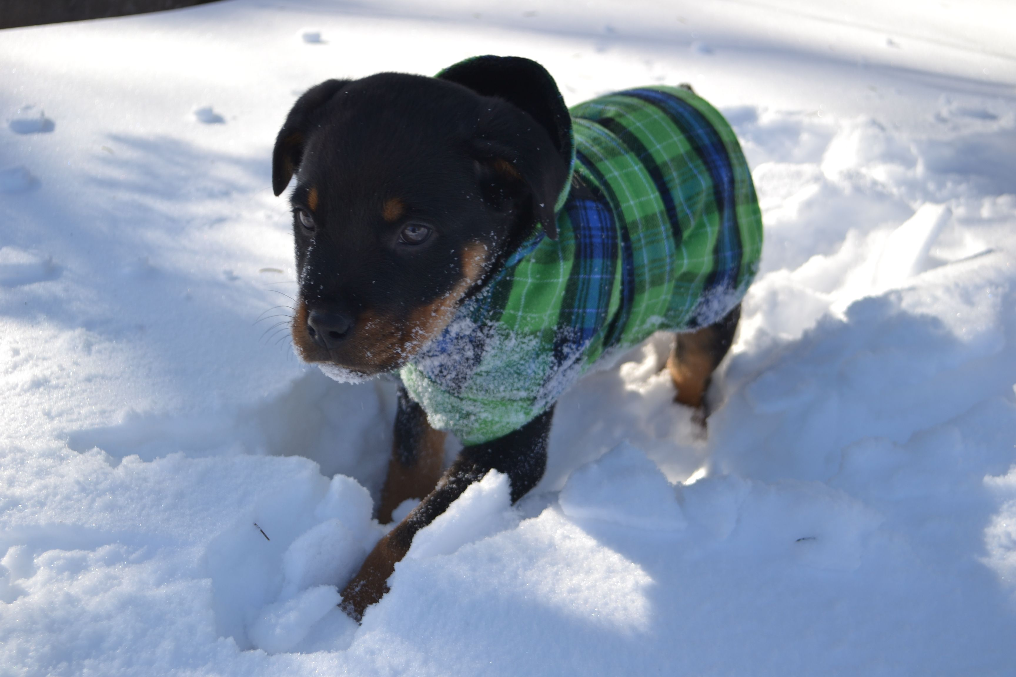 Flannel shirts for dogs  Dogs uc Flannel too  The Vermont Flannel Style  Pinterest