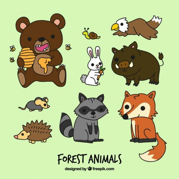 Download Funny Cartoon Forest Animals For Free Cartoon Animals Funny Cartoon Animal Cartoon Video