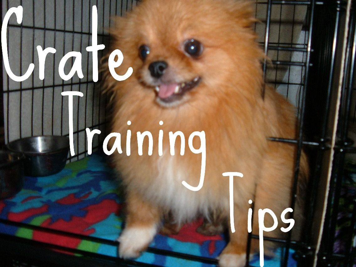 Crate Train Tips Random Things Pinterest Crate Training