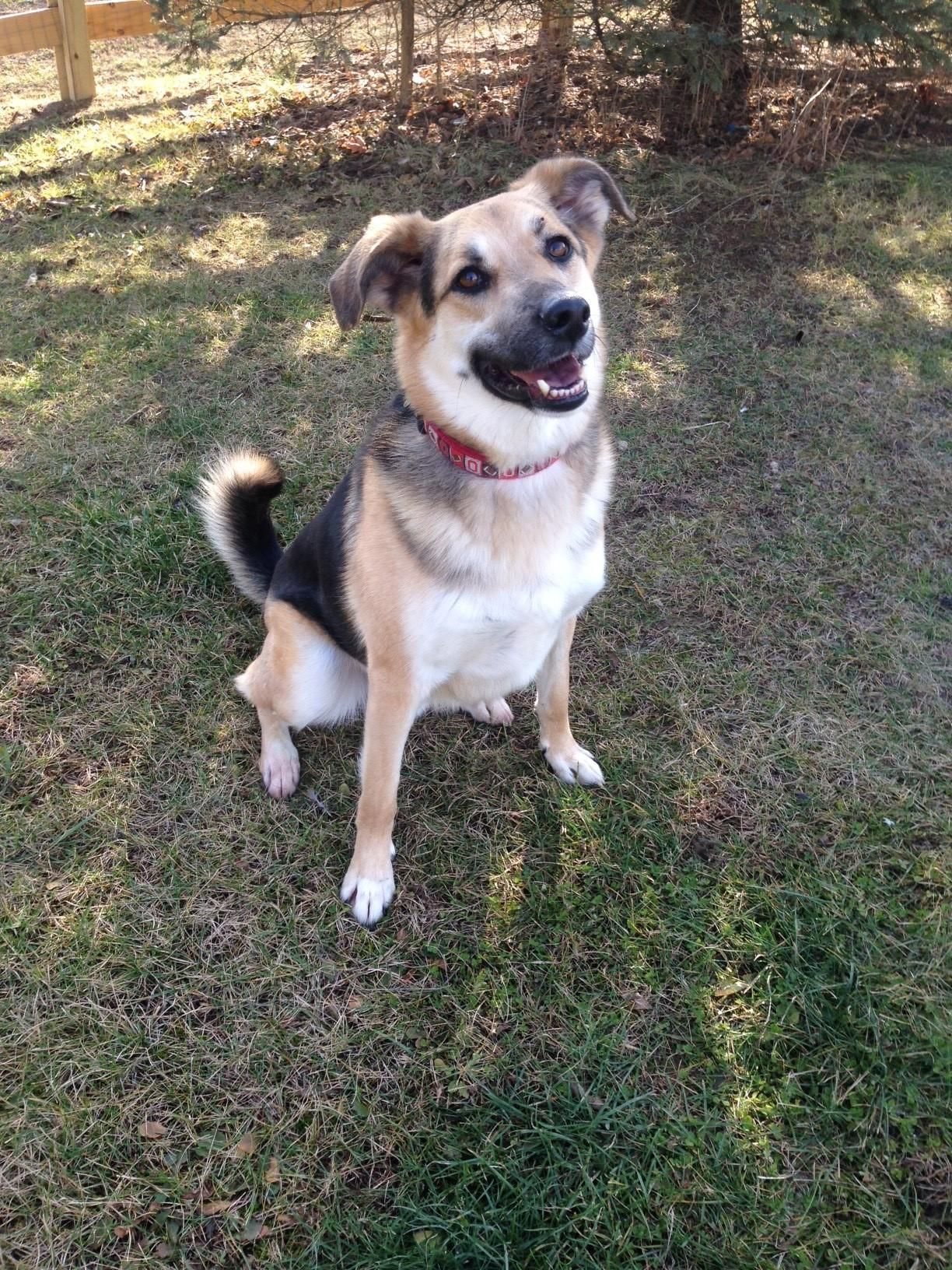 Adopt Brodey McEnroe on Shepherd mix dog, Brodey, Dogs
