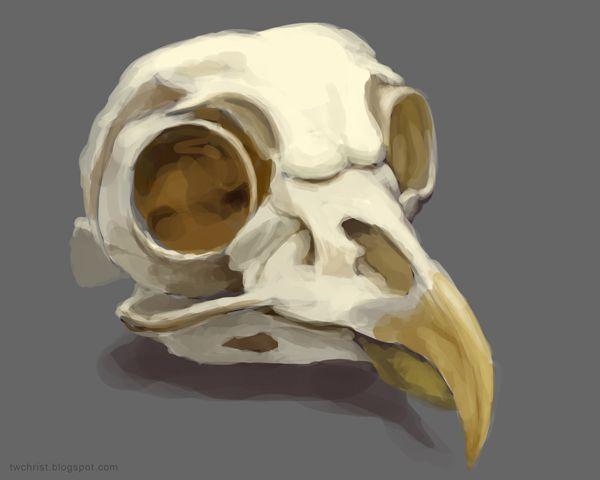 twchrist: June 2011 | bird skeletons | Pinterest | Bird skull ...
