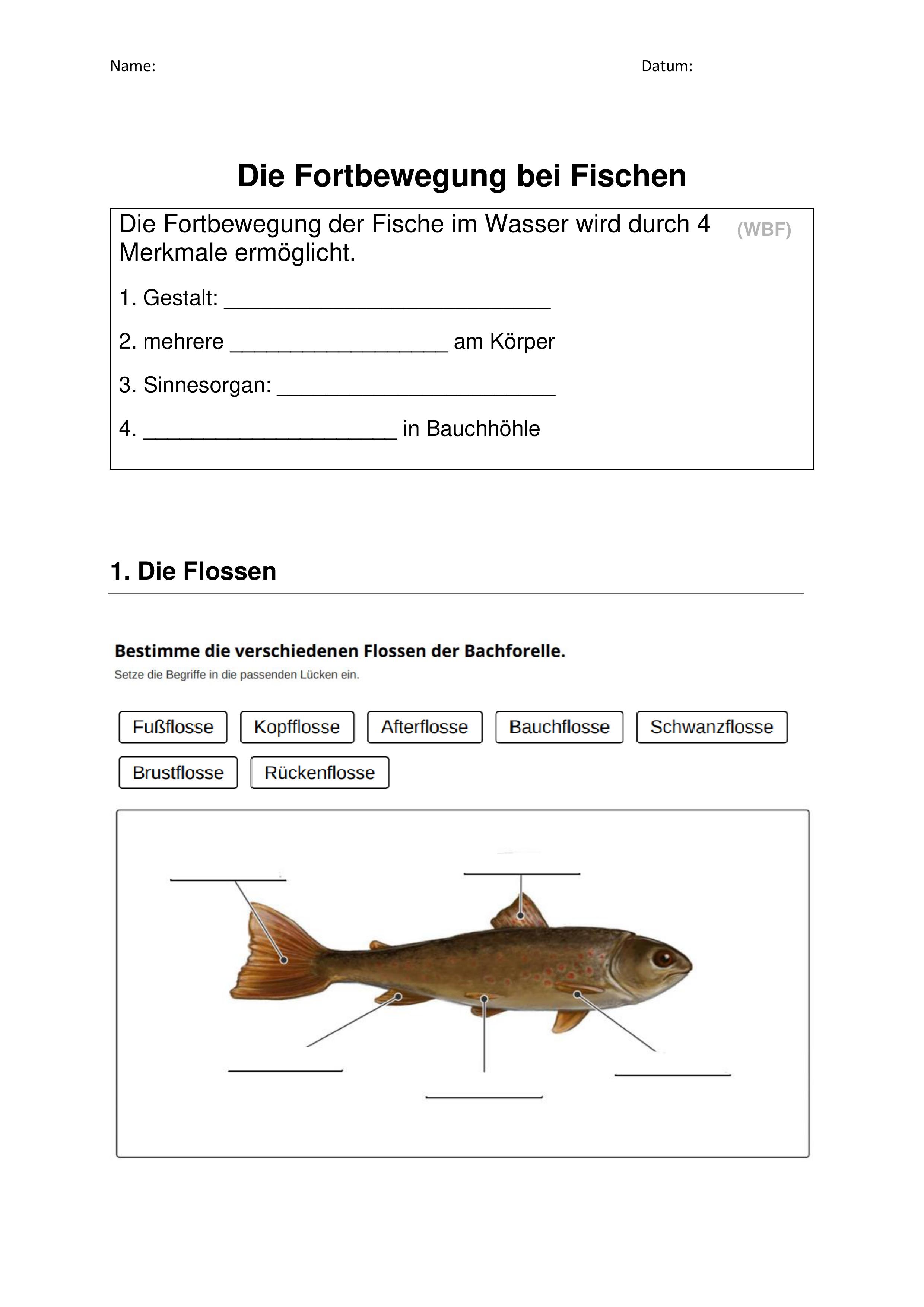 Fortbewegung Fische – Unterrichtsmaterial im Fach Biologie ...