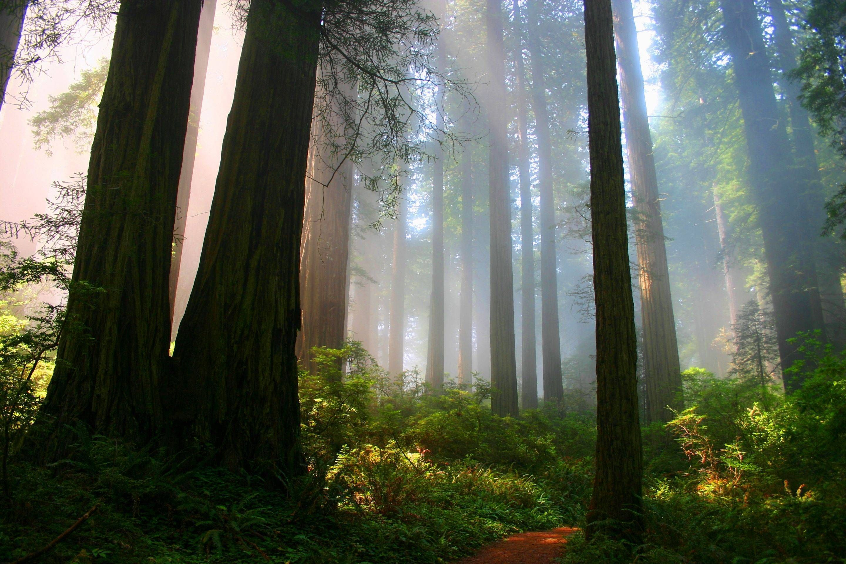 The Forests Of California Imgur Hd Nature Wallpapers Nature Wallpaper Nature