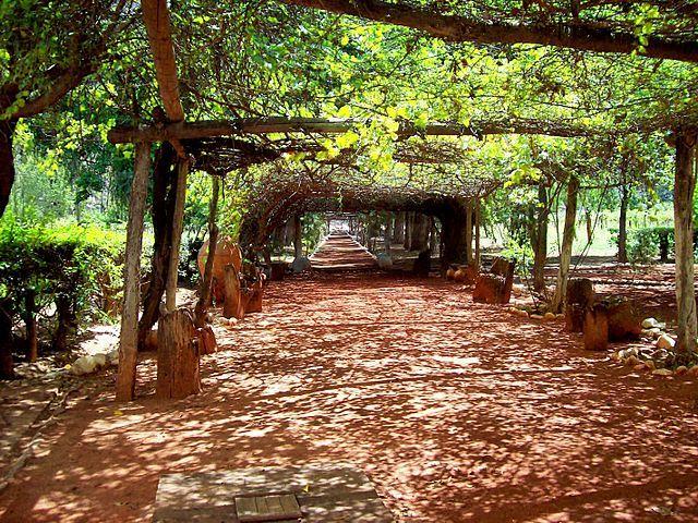 Vineyard in Chilecito. La Rioja, argentina Pergola, La