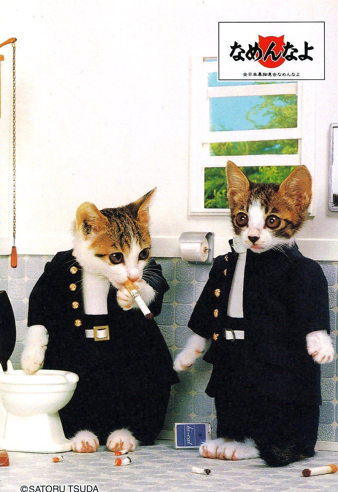 Rock N Roll Kitties Remembering The Nameneko Japanese Kitten Videos That Were A Night Flight Favorite Cats Kitten Gif Japanese Embroidery