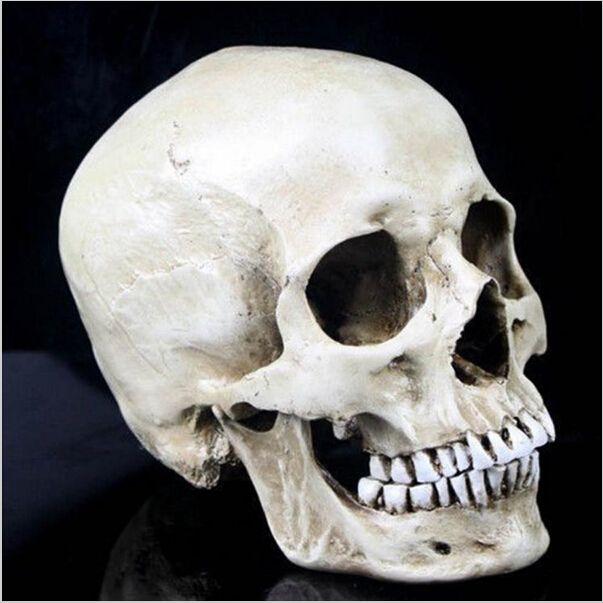 1 Menschlichen Schädel Totenschädel Figur Modell Pub Halloween Dekor 1