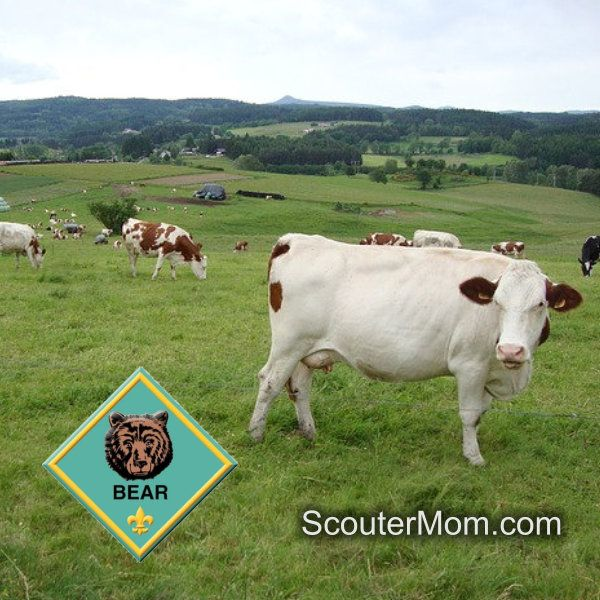 Today's plan covers part ofBear Elective 16 – Farm Animals. Cub Scouts learn about how people raise and use farm animals.