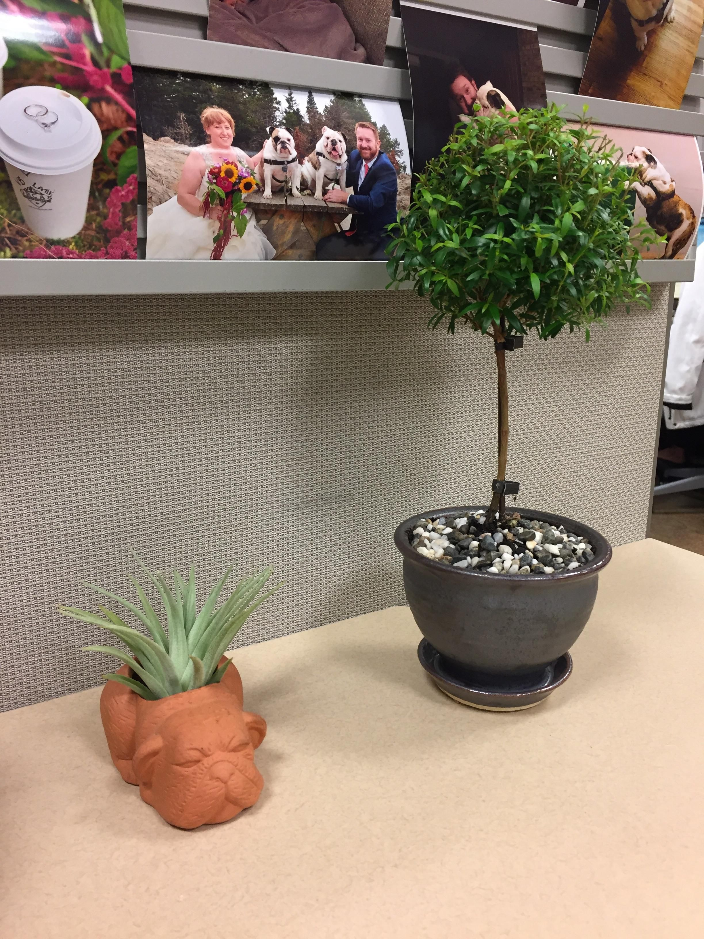 Still too wet and cold to garden here in the PNW so I had to bring some green to my desk at work. Please send sun. #gardening #garden #DIY #home #flowers #roses #nature #landscaping #horticulture