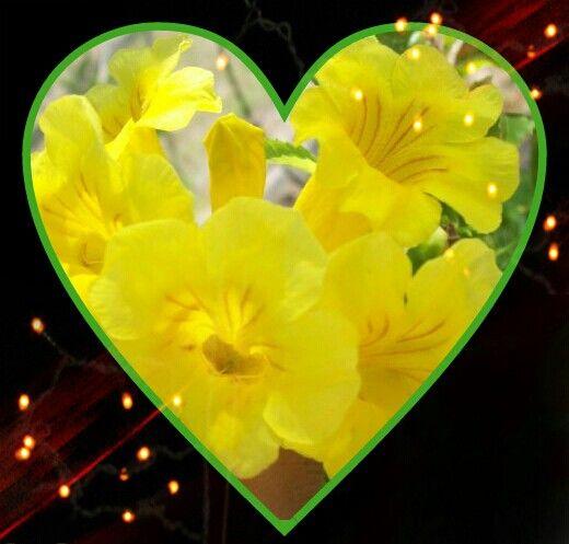 Flor en corazon
