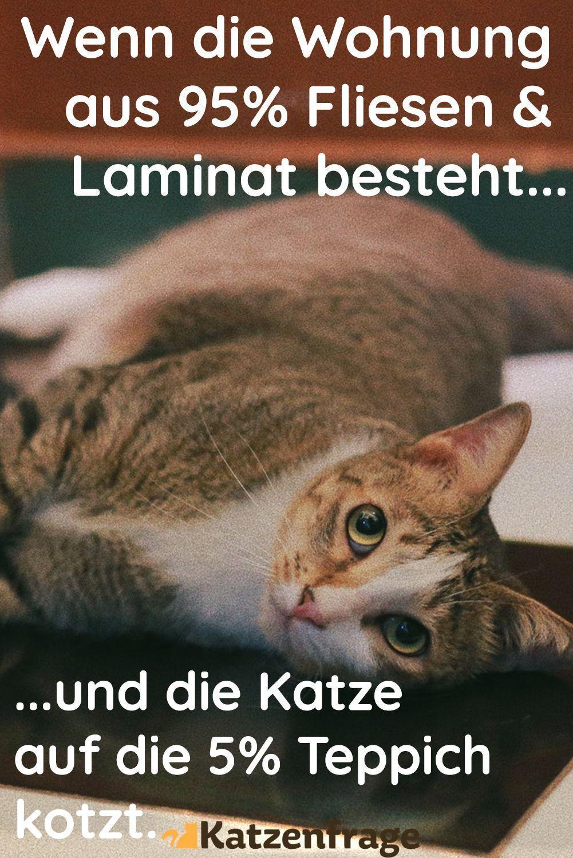Katzenfrage Katzenmeme Katzenspruch Katze Lustig Cat Cat