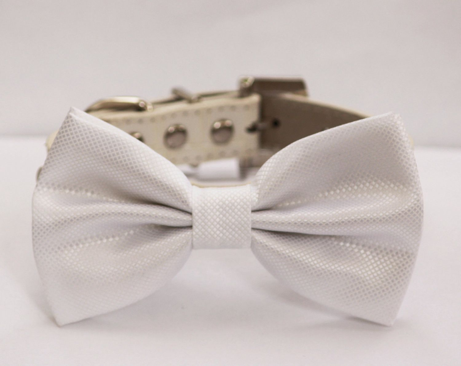Beautiful Collar Bow Adorable Dog - 29c401cfbec319c77d25a9b84c224ff6  HD_216745  .jpg