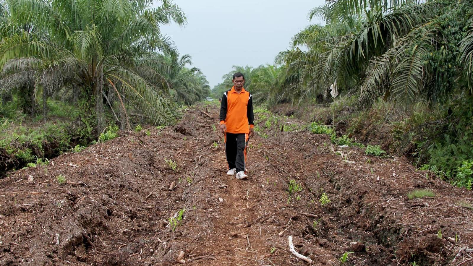 Un pueblo contra los incendios provocados por el aceite de palma. Noticias de Mundo. Dosan, en la provincia de Riau, lanzó en 2009 un programa pionero para acabar con los fuegos que empezaron tras plantar las palmas aceiteras en la región