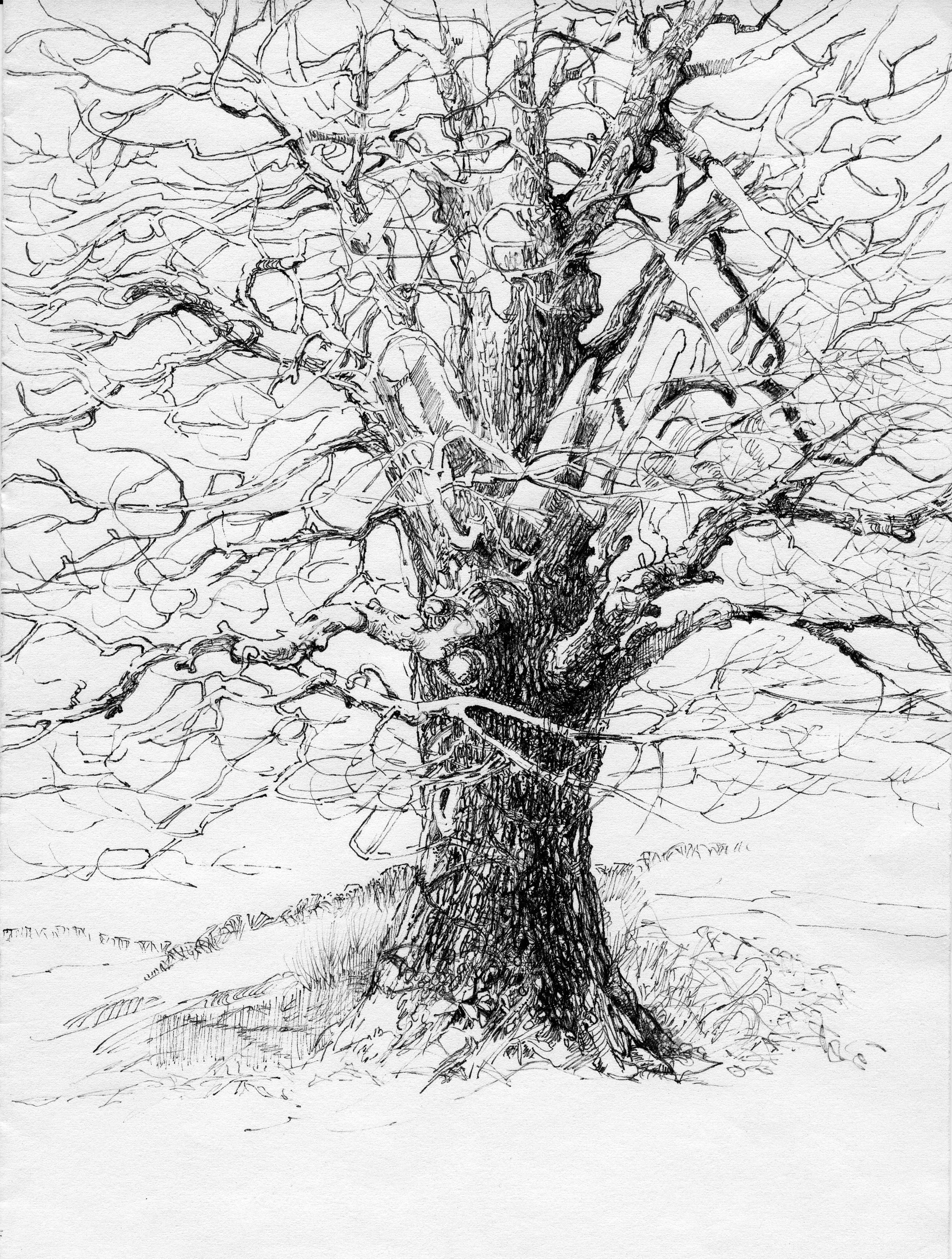 деревья рисунок графика кладка