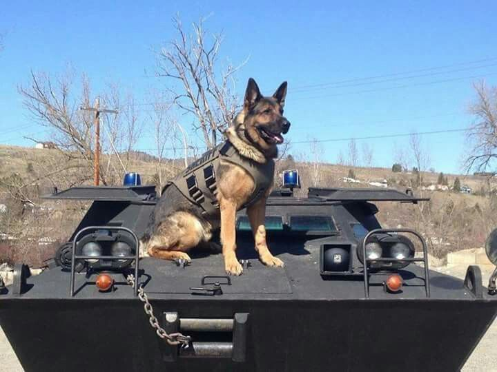 Swat K9 Military Dogs Military Working Dogs War Dogs