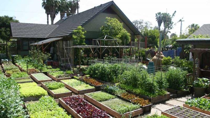 Via Urbanhomestead Org Garten Bauerngarten Garten Ideen