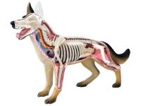 ANIMAL ANATOMY MODELS : Mad About Science, Science Toys, Science Kits, Lab Supplies, Novelties & Gift Ideas
