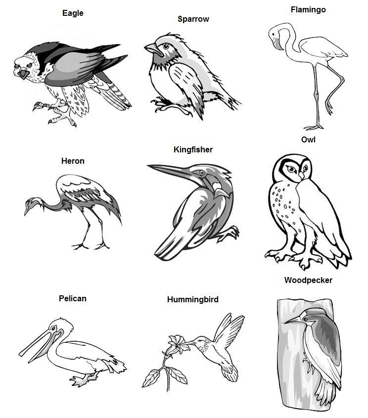 types of birds coloring pages - photo#7
