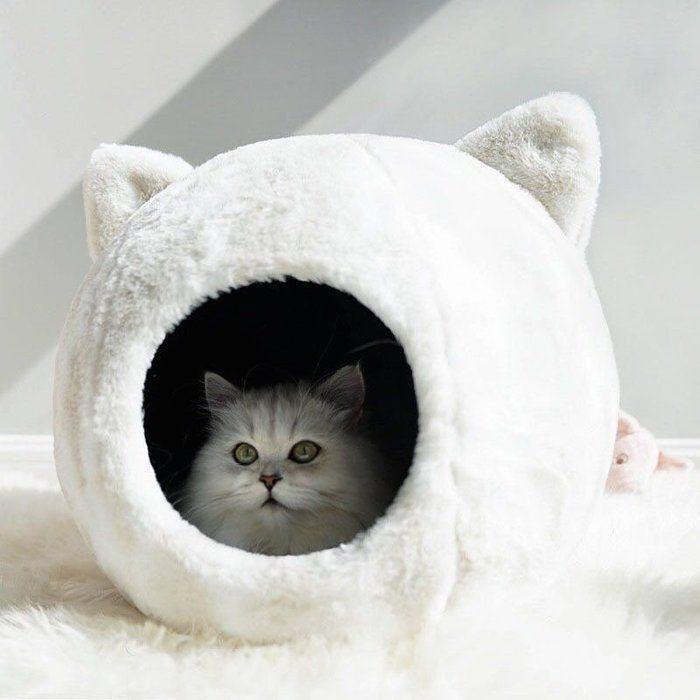 クリスマスにも セレクトショップの猫ベッドがかわいすぎ ねこのきもちweb Magazine 猫用ベッド 猫 家 子猫
