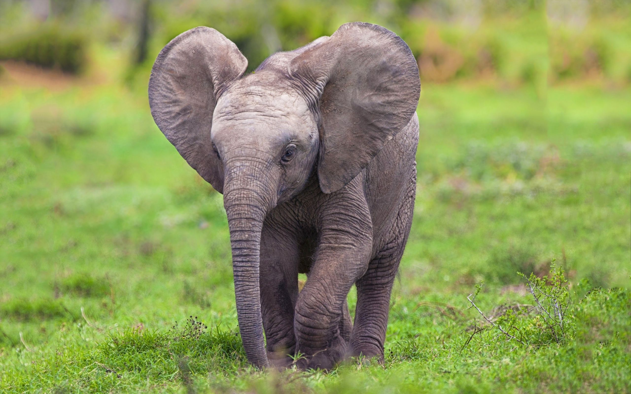 Baby elephants 15 hd screensavers hd image wallpaper - Free funny animal screensavers ...