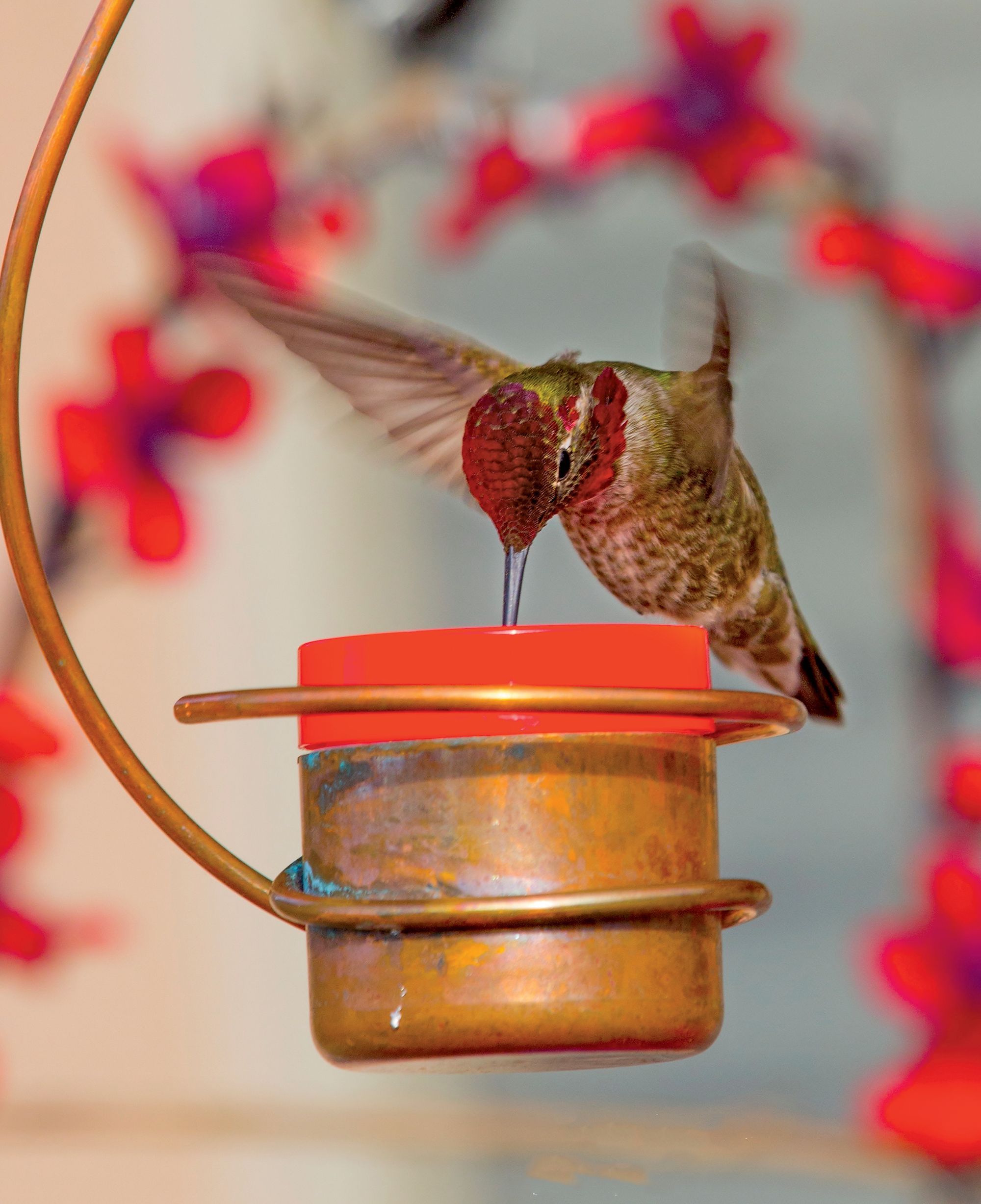 get for image full mixture hummingbird hummingbirds best superb location innovative feeder more to decorative feeders