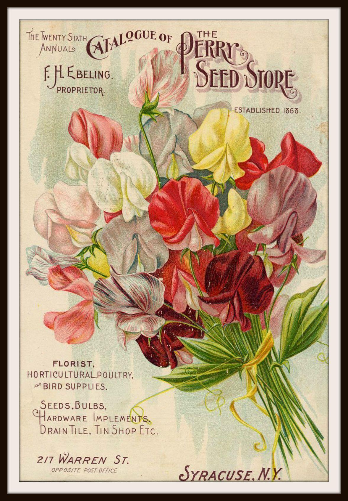 Beautiful art print Vintage Seed Pack Image Wall Decor Unframed ...