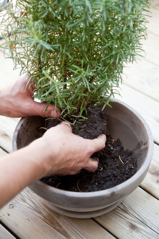 Comment planter des plantes aromatiques sur son balcon
